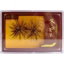 冬虫夏草(再康)甲级8克